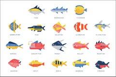 De inzameling van overzees en de rivier vissen en het voorzien naam in Engelse vectorillustraties van letters royalty-vrije illustratie