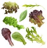 De Inzameling van saladebladeren royalty-vrije stock afbeelding