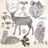 De inzameling van vectordieren en bloeit voor ontwerp Stock Afbeelding