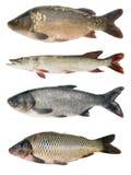 De inzameling van vissen Stock Afbeelding
