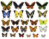 De inzameling van vlinders stock foto's