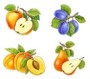 De inzameling van vruchten vector illustratie
