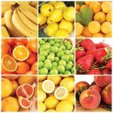 De inzameling van vruchten Stock Afbeelding