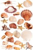 De inzameling van zeeschelpen royalty-vrije stock afbeeldingen