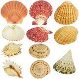 De inzameling van zeeschelpen stock afbeeldingen