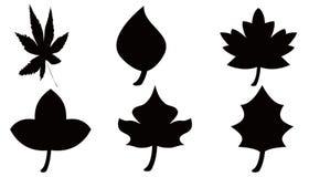 De inzamelingen van bladeren Stock Afbeeldingen