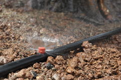 De irrigatie van de sproeier Stock Fotografie