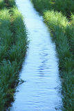 De irrigatie van de tarwe Royalty-vrije Stock Fotografie