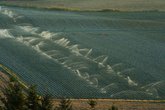De irrigatie van het gewas, Oregon Stock Fotografie
