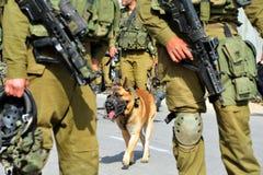 De Israëlische hond van de legeraanval Stock Foto