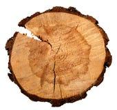 De jaarlijkse die ringen van de boomgroei van de dwarsdoorsnede van een boomboomstam op wit wordt geïsoleerd stock afbeelding