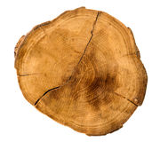 De jaarlijkse die ringen van de boomgroei van de dwarsdoorsnede van een boomboomstam op wit wordt geïsoleerd stock fotografie