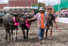 De jaarlijkse Rassen van Buffels in Chonbburi 2009 Stock Afbeeldingen