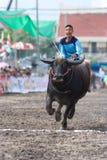 De jaarlijkse Rassen van Buffels in Chonburi 2009 Royalty-vrije Stock Afbeeldingen