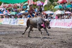 De jaarlijkse Rassen van Buffels in Chonburi 2009 Stock Foto's