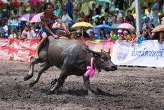 De jaarlijkse Rassen van Buffels in Chonburi 2009 Stock Afbeeldingen