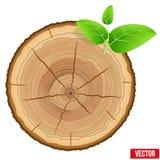 De jaarlijkse ringen van de boomgroei van het dwarsdoorsnedehout Stock Fotografie