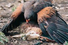 De jacht met adelaars stock foto