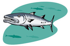 De jacht van de barracuda voor een prooi royalty-vrije illustratie