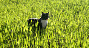 De jacht van de kat stock afbeelding