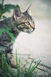 De jacht van de kat achter groen gras Royalty-vrije Stock Afbeeldingen