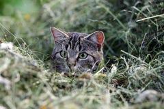De jacht van de muis Stock Foto's