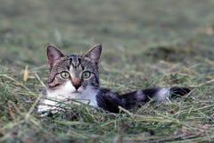 De jacht van de muis Stock Afbeelding