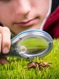 De Jacht van het insect royalty-vrije stock afbeelding