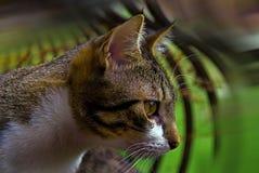De jacht van kat in aard royalty-vrije stock fotografie