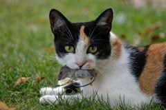 De jacht van kat met vangstmuis in tuin Stock Foto's
