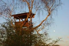 De jachthuid in een boom stock foto