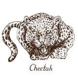 De jachtluipaard die, heeft een verbitterde mond, hoektanden geopend grommen royalty-vrije illustratie