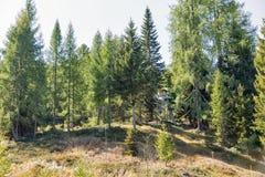 De jachttoren in alpien hout Westelijke Carinthia, Oostenrijk Stock Foto
