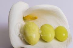 De jadeeieren liggen op een witte bloem Stock Foto