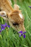 Babyjakken royalty-vrije stock afbeeldingen