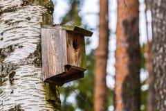 22 de janeiro de 2017: Ninho da andorinha em Skogskyrkogarden em Stockhol Imagem de Stock Royalty Free