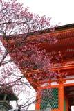 De Japanse Bloesem van de Tempel Royalty-vrije Stock Afbeelding