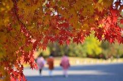 De Japanse garden、 herfst Royalty-vrije Stock Foto