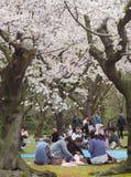 De Japanse het genieten van kers komt festival korakuen binnen tuin tot bloei Royalty-vrije Stock Afbeelding
