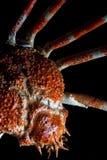 De Japanse Krab van de Spin, die op zwarte wordt geïsoleerdg Royalty-vrije Stock Afbeelding
