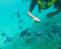 De Japanse mens geniet van snorkelend en voedend vissen in Okinawa, Japan royalty-vrije stock afbeeldingen