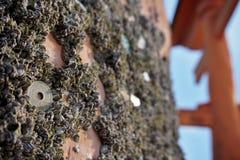 De Japanse muntstukken (Yens, JPY) sticked aan de houten pool van Myiajima-poort (reuzetorii van Itsukushima) stock foto