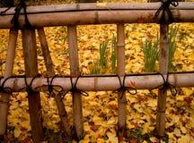 De Japanse omheining van de herfst Royalty-vrije Stock Fotografie