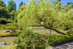 De Japanse tuin van Portland Het landschap van Nice het desing Goed Gehouden Tuin Stock Afbeelding