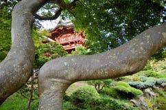 De Japanse Tuin van de Thee royalty-vrije stock fotografie