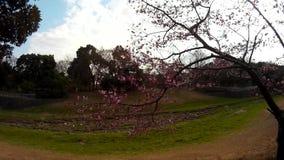 15-04-2018 22/5000 de jardim da cereja em japão filme