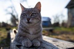 De jeunes, mignons, dr?les mensonges de chat sur un banc en bois dans les rayons du soleil de ressort et examine soigneusement la photographie stock libre de droits