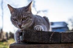 De jeunes, mignons, espiègles mensonges de chat sur un banc en bois dans les rayons du soleil de ressort, sur un fond brouillé d' photographie stock