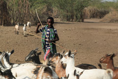 De jeunes shepard loin Images libres de droits