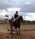 De jockey op een paard - vóór de sprong Stock Afbeelding